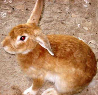 Nice fat rabbit for dinner!