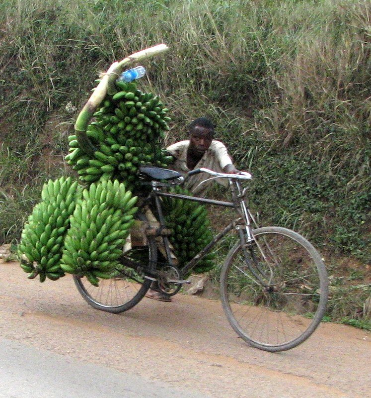 Uganda Successes: Matooke Banana Farm Co-operatives