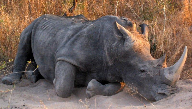 South Africa: Kruger Game Park