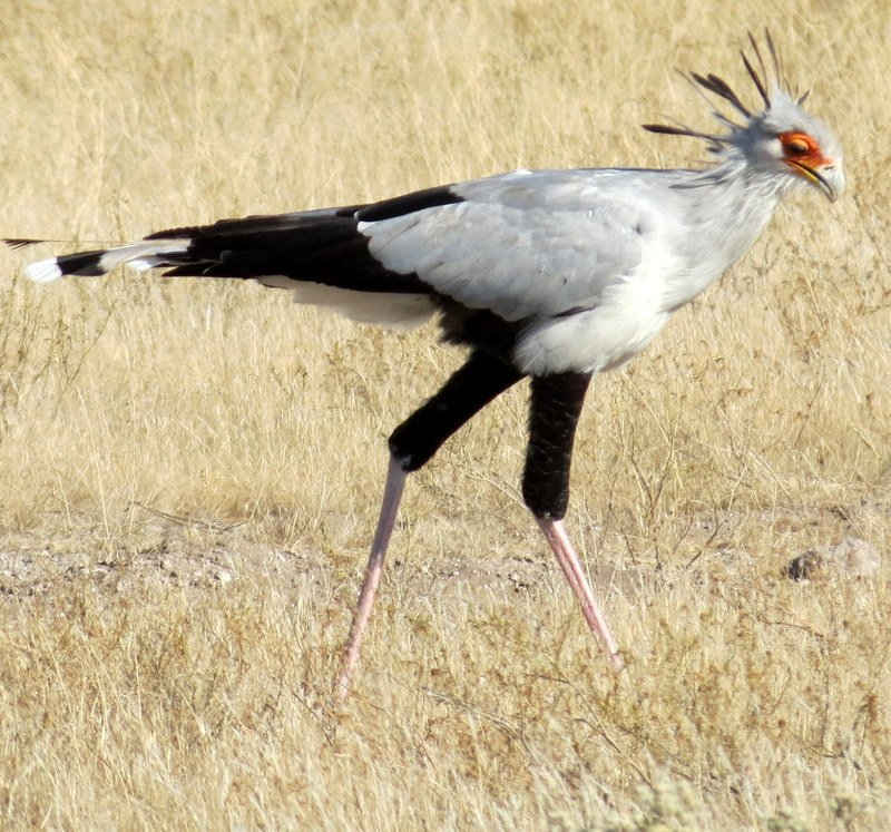 Botswana: Birds Galore