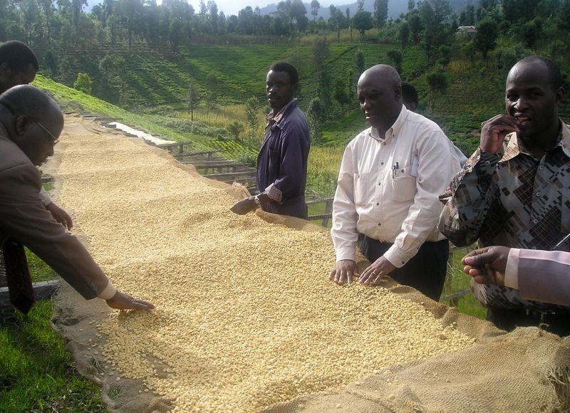 Kenya Successes: Prime Coffee-Growing Region Now Supplies Worldclass Premium Coffee
