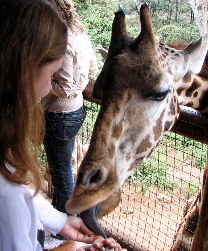 Kenya's Blue-Tongued Giraffes, Adopted Elephants and Tsavo Park's Man-Eating Lions