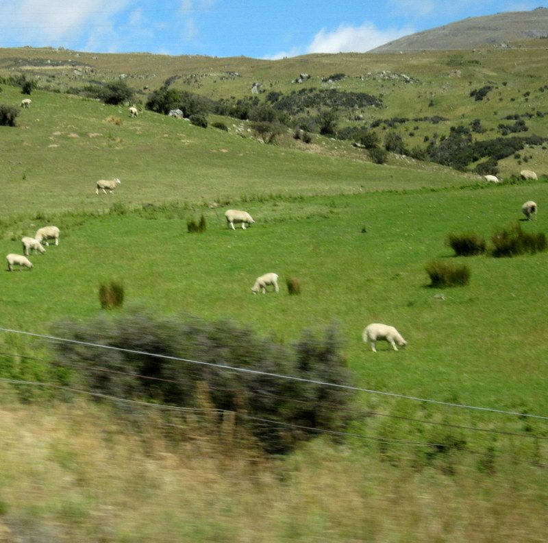 New Zealand Overview–from Countryside to Cities