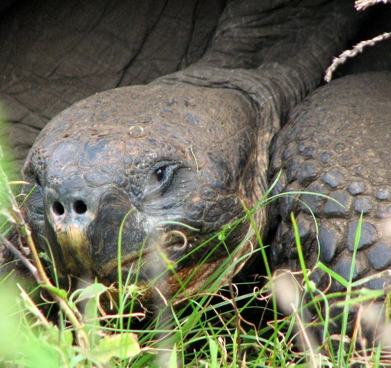 Galapagos Archipelago's Tortoises & Other Animals