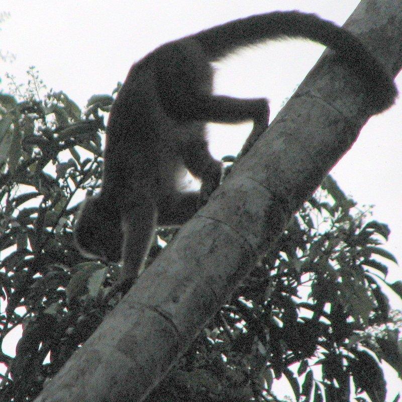 Ecuador's Amazon Basin Jungle in El Oriente (The East)