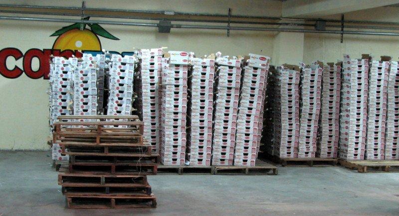 Haiti Success: Collaborative Haiti Hope Project's Goal to Help 25,000 Mango Farmers