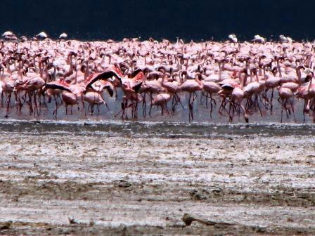 Kenya's Alkaline Lakes–Nakuru & Elementaita–AND Hellsgate