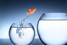 Goldfish leaps